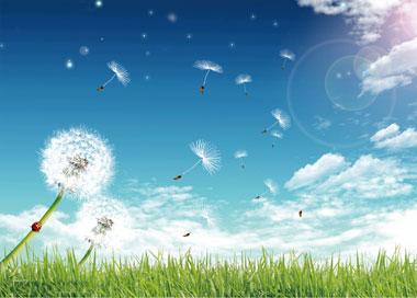 ——蒲公英的花瓣落了,花托上长出了洁白的绒球;一阵阵风吹过,那可爱